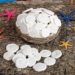 Genuine Sand Dollars in Basket